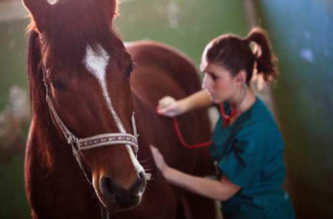 Collegamento a L'Europa promuove a pieni voti la medicina veterinaria di Padova