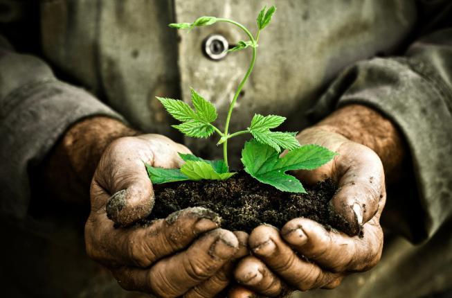 Collegamento a Area Agraria e Forestale